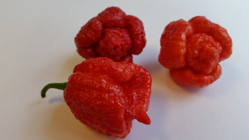 Trinidad Moruga Scorpion Red - Seeds - Bohica Pepper Hut