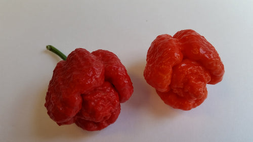 Trinidad Moruga Scorpion Red - Seeds