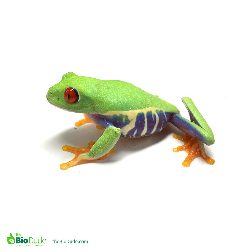 Bioactivity and Red Eyed Tree Frogs