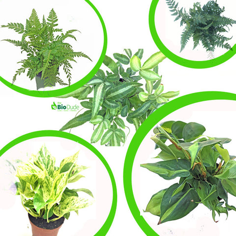 "4"" Large Tropicals 5 pack"