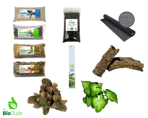 Day Gecko Bioactive Kit Basic