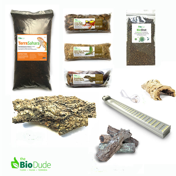 Desert Iguana Lizard Bioactive Kit