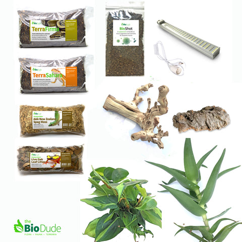 Fire Skink lizard bioactive kit