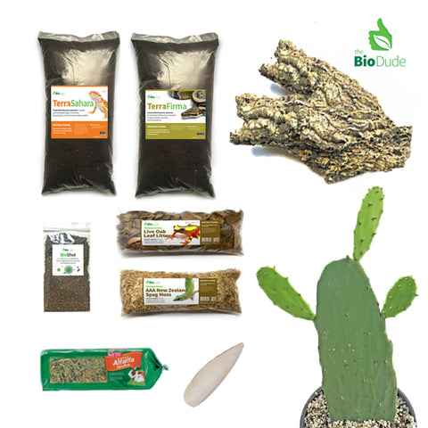 Greek Tortoise Bioactive Kit