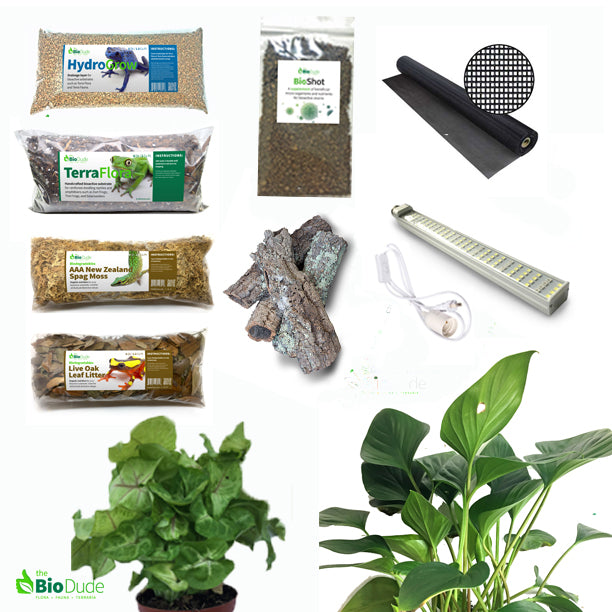 Buy Milky Tree Frog Bioactive Kit At The Bio Dude For Only 169 95