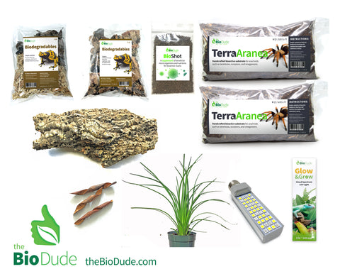 Desert Hairy Scorpion (Hadrurus arizonensis) Bioactive Kit