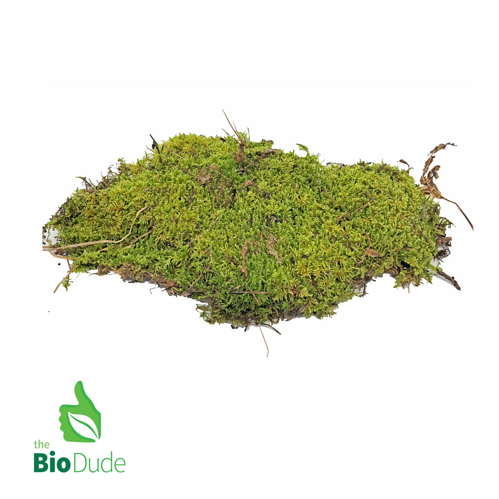 Shop For Live Mosses And Microplants At The Bio Dude Desktop Terrariums Lichen Micro Terrarium Plants Micro Terrariums Moss Moss Spore Mix Plant Tropical Plant