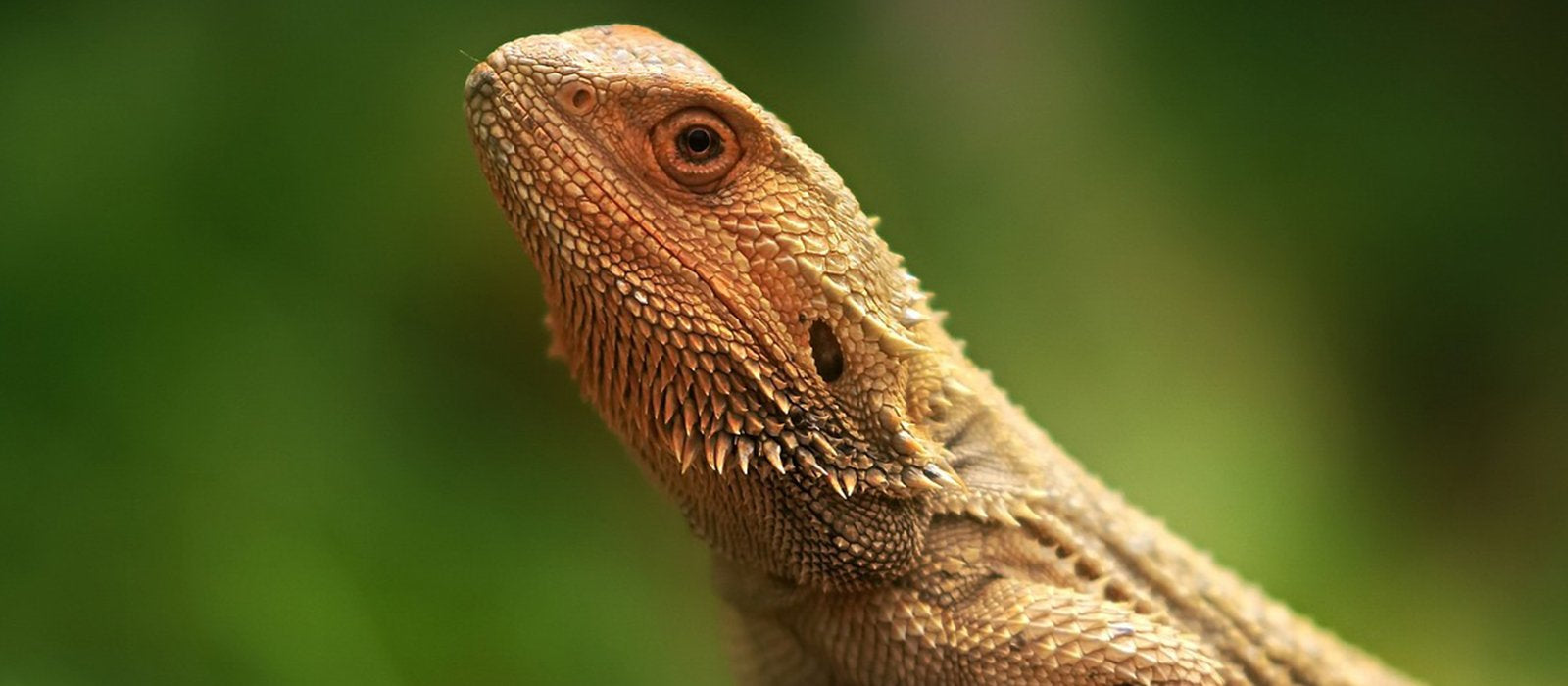 Create your own Micro Terrarium