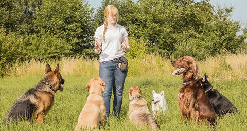 training your dogs https://www.cesarsway.com/sites/newcesarsway/files/styles/large_article_preview/public/5-essential-commands-you-can-teach-your-dog_1.jpg?itok=nYOp-YSR