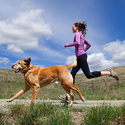 outdoor activities with your dog hiking with your dog walking with your dog playing with your dog and dog training