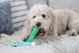 Dog using Bristly Toothbrush Toy