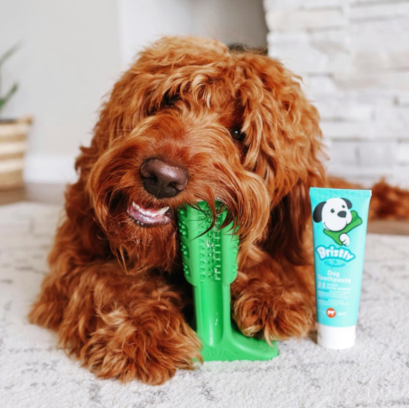 dog with toothbrush and toothpaste