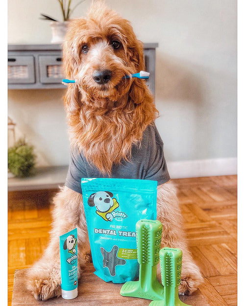 Dog with Bristly Dental Care Pack