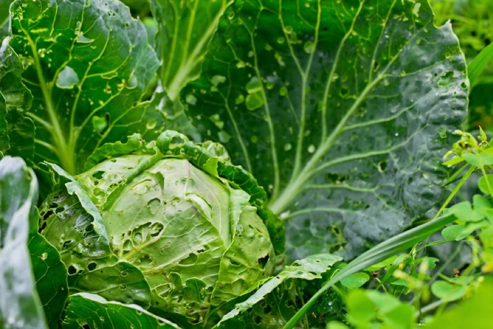 6 Chemical-Free Strategies for Keeping Pests Away From Your Vegetables