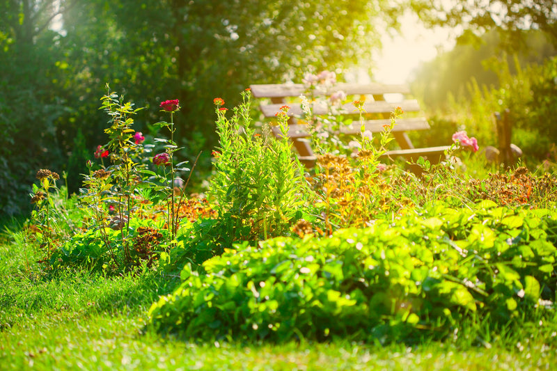 Your Garden Can Help Combat Global Warming