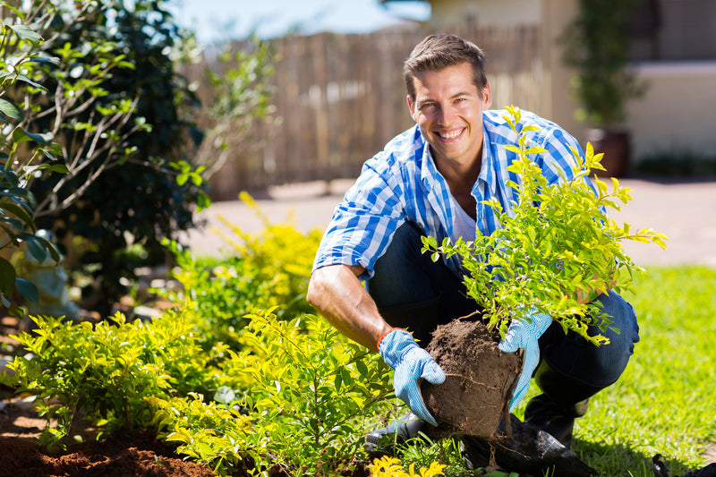 How Gardening Can Help Veterans With PTSD Find Peace