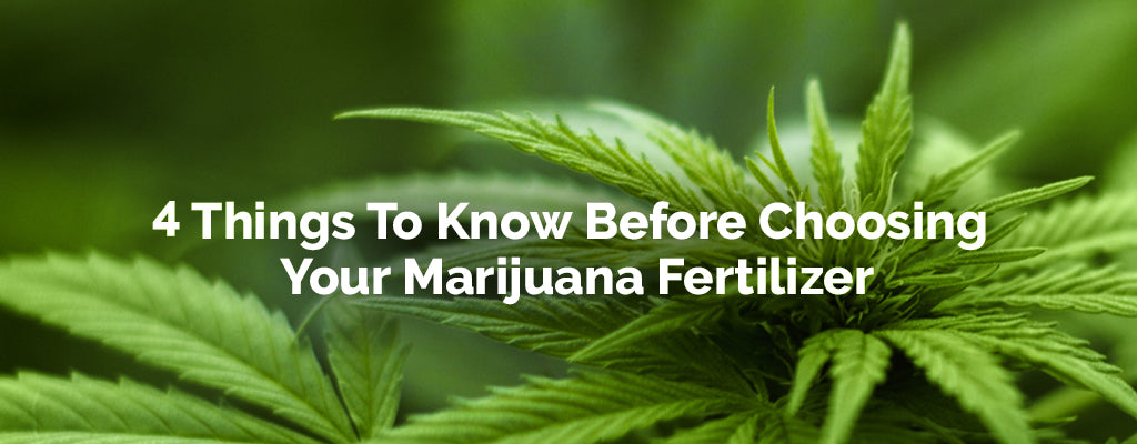 Marijuana Fertilizer - 4 things you need to know