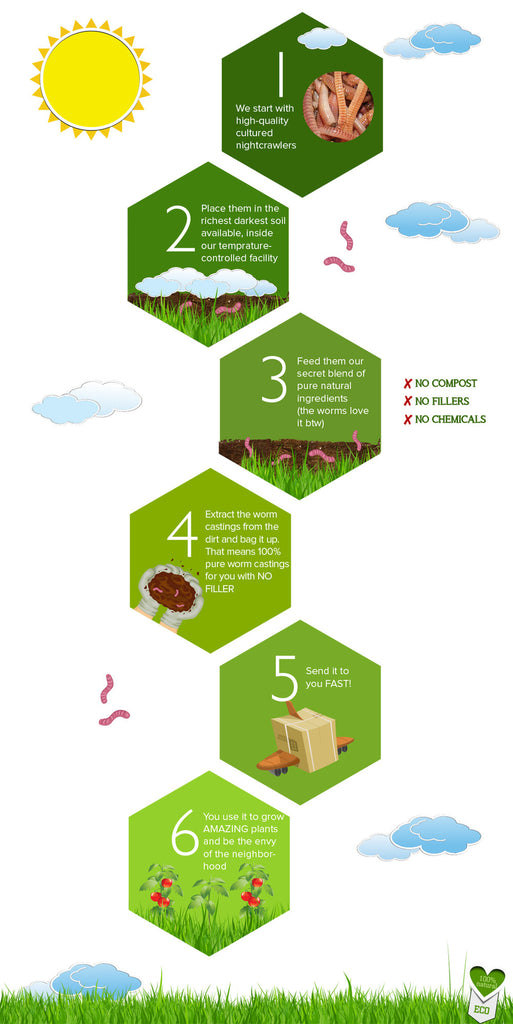 Worm Castings Infographic