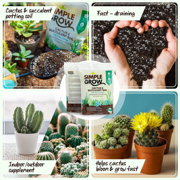 Simple Grow Cactus & Succulent Soil - 4 Quarts