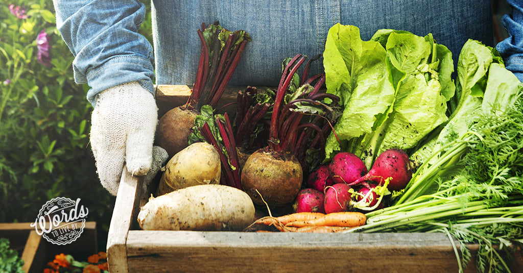 Get your fair share of fresh, local produce by investing in a CSA