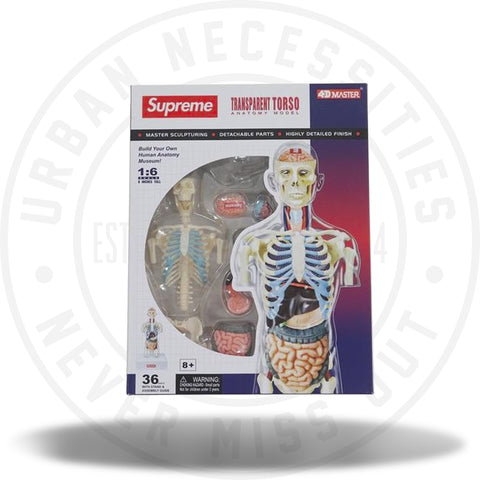 Supreme Male Anatomy Model Clear-Urban Necessities