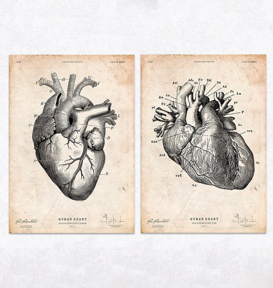 Vintage heart anatomy poster by codex anatomicus