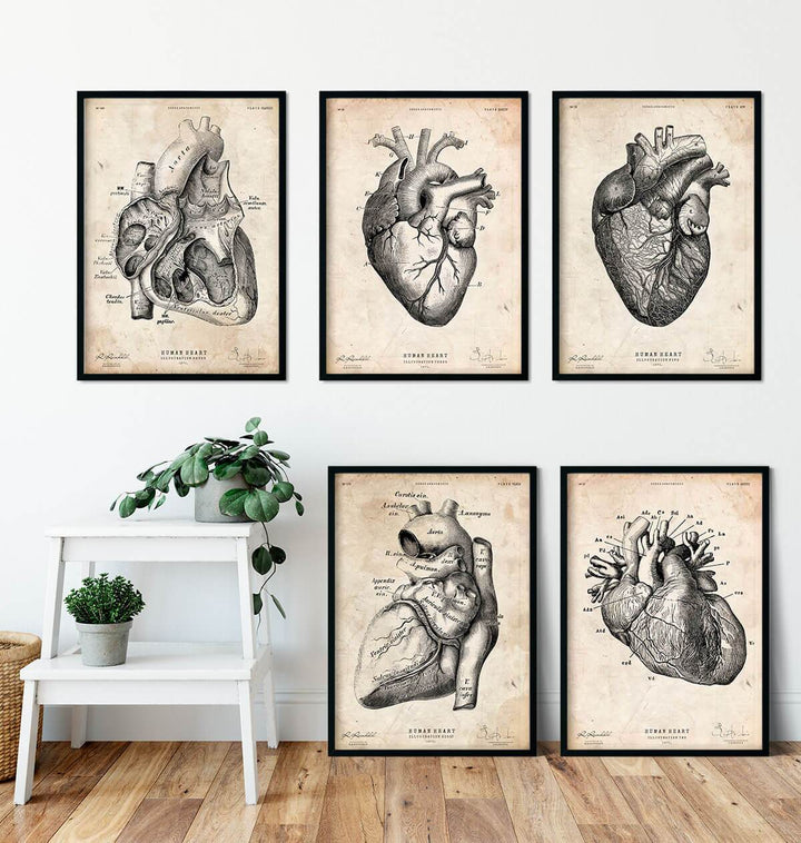 Heart anatomy art posters