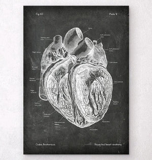 Dissected heart anatomy