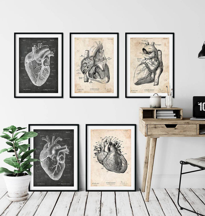 Heart anatomy art wall