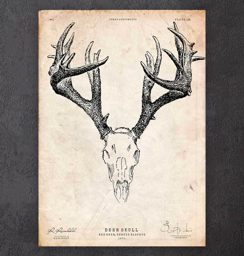 Deer skeleton art