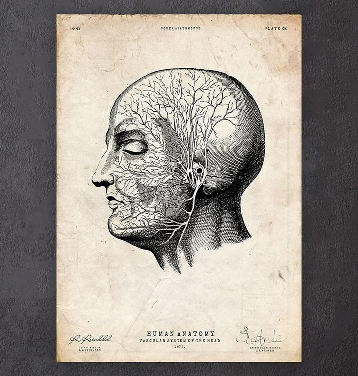 Head anatomy print V