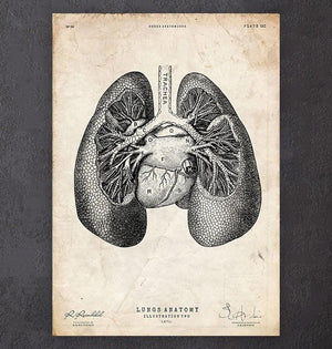 Lungs anatomy drawing