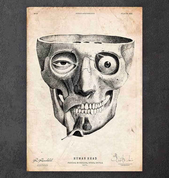 Face anatomy poster