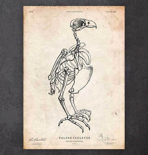 Falcon skeleton art print
