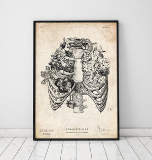 Rib cage print Vintage Anatomy Poster in a frame