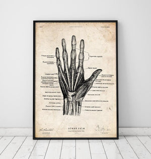 Hand vintage anatomy poster by Codex Anatomicus