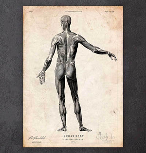 Full body human anatomy print II