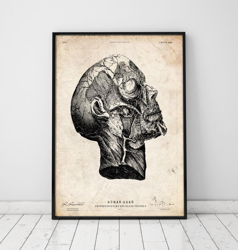 Head anatomy poster