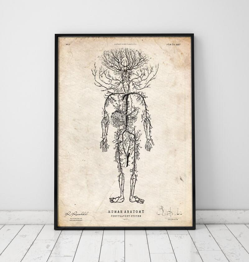 Vascular system vintage anatomy poster in a frame by codex anatomicus