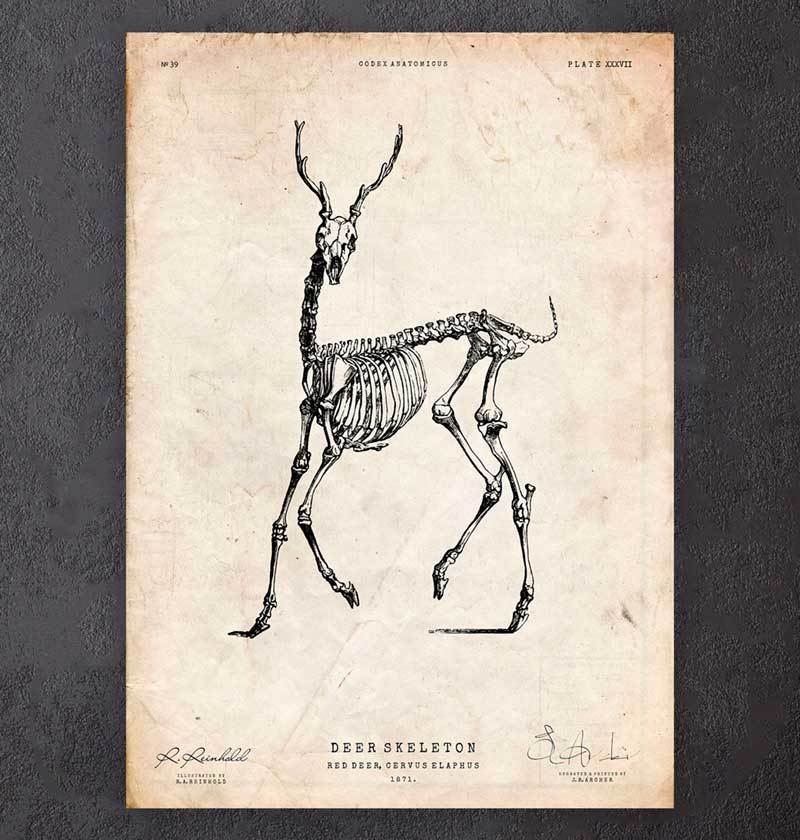 Deer skeleton art print