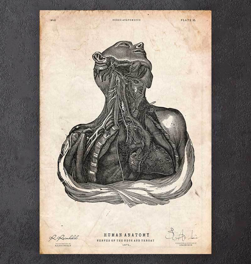 Neck and throat anatomy print