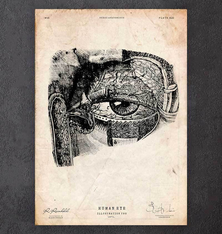 Eye anatomy poster