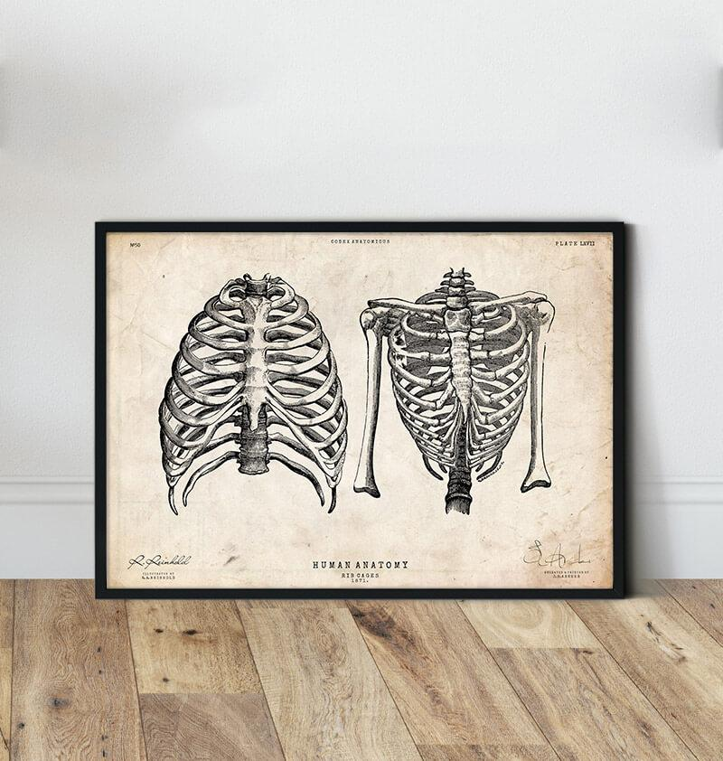 Rib cage poster - Vintage Poster