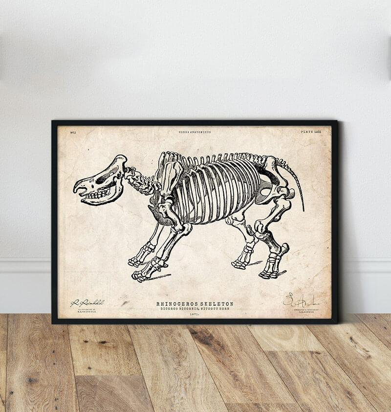 Rhino anatomy art