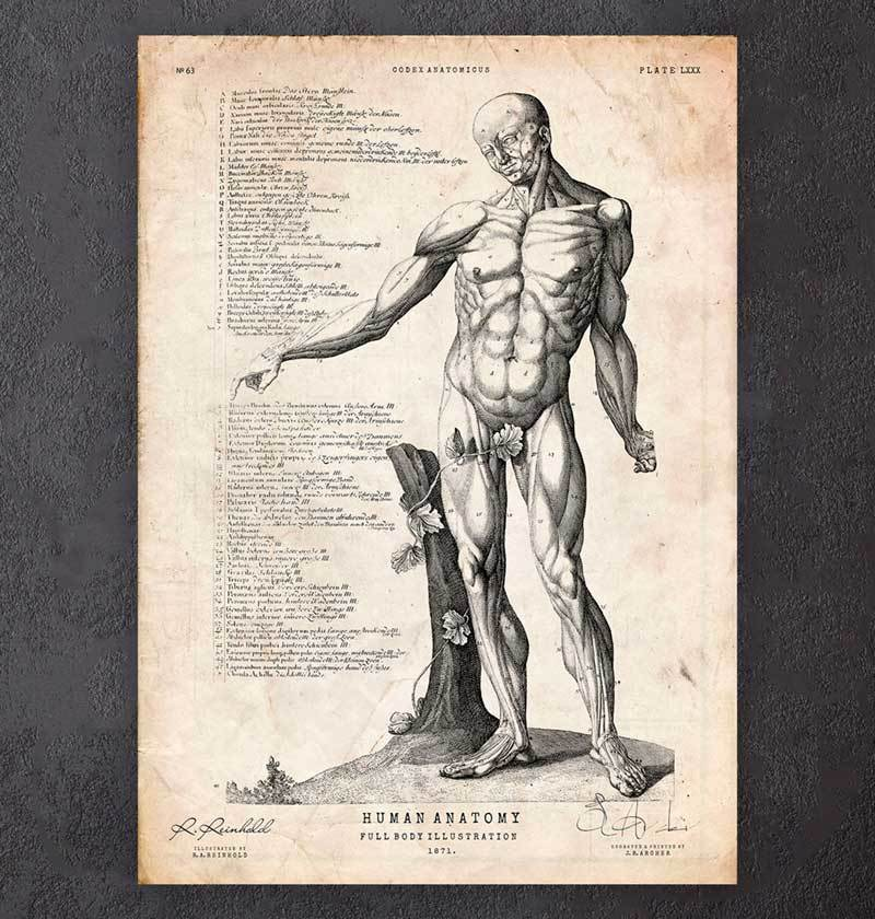 Full Body Human Anatomy Print Vi Codex Anatomicus