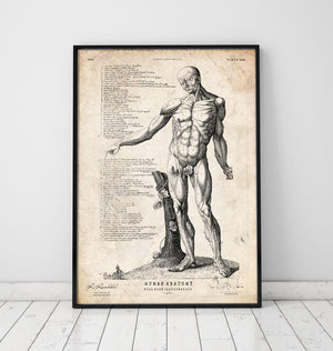 Full body human anatomy print VI art print