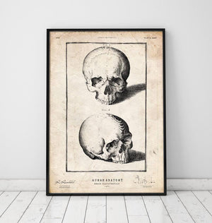 Human skull print by Codex Anatomicus in a frame