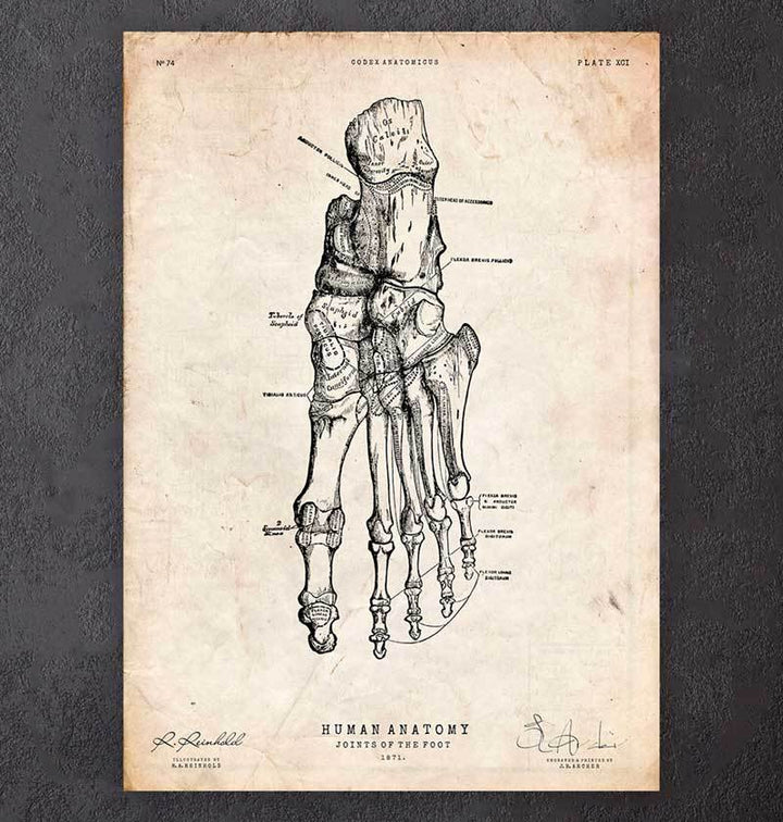 Foot anatomy art print