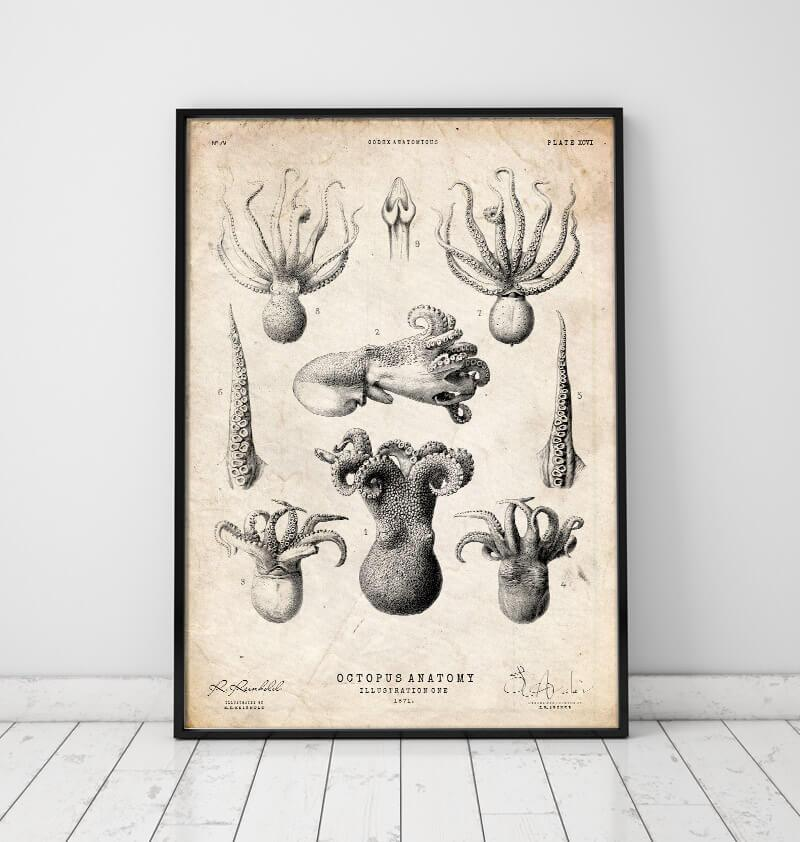 Octopus anatomy poster