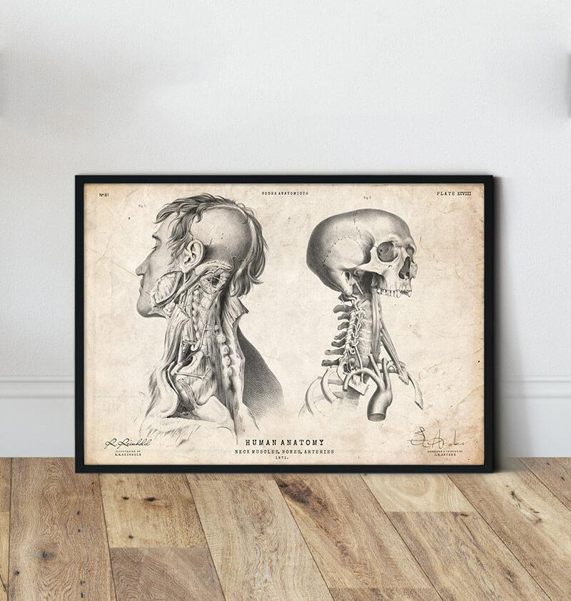 vintage head anatomy poster by codex anatomicus